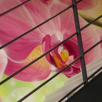 Escalade d'orchidées…